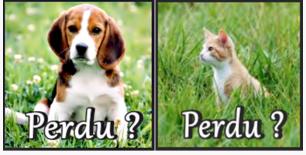 Comment retrouver son chien, comment retrouver son chat